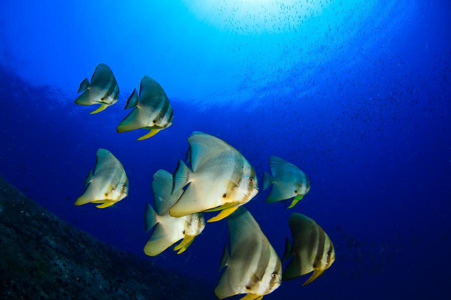 plongée sri lanka - colombo - 2