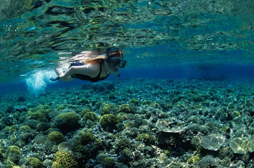 Femme , plongée, apnée, coraux