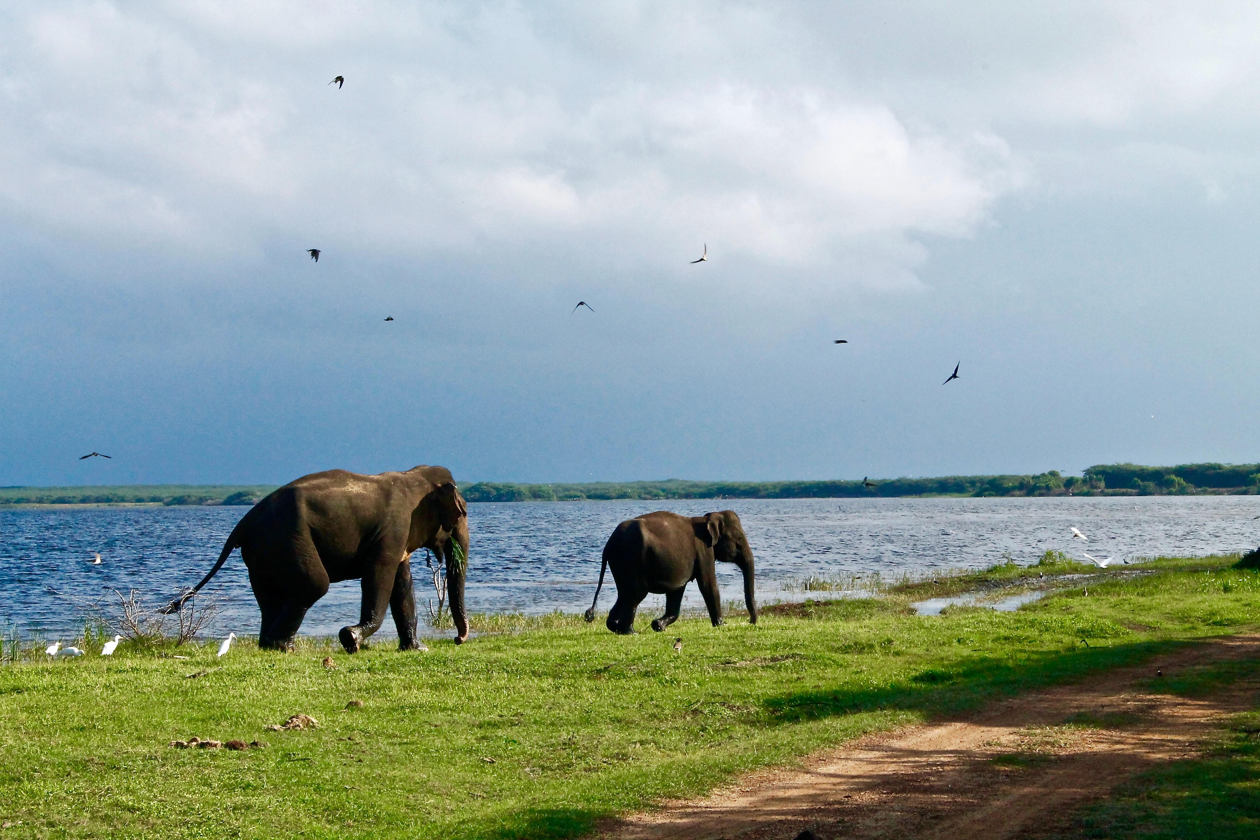 2 éléphants au bord d'un lac